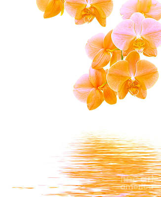 Orchid Photograph - Orchid Background by Michal Bednarek