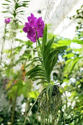 Epiphyte Photograph - Orchid by Bjanka Kadic