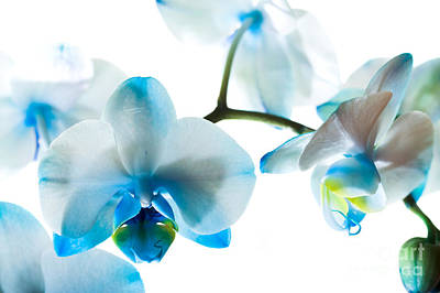 Orchid Closeup Print by Boon Mee