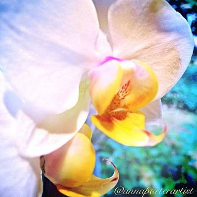 Orchids Photograph - White Christmas Orchid by Anna Porter