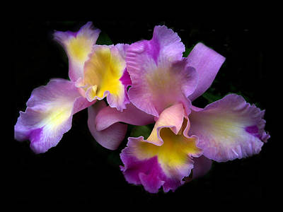 Orchid Digital Art - Orchid Embrace by Jessica Jenney