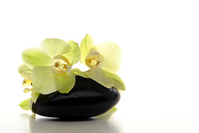 Orchid Flowers On Polished Stone Print by Olivier Le Queinec