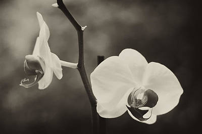Orchid Flowers Print by Stephanie McDowell