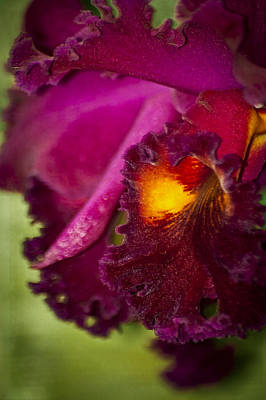 Eureka Springs Photograph - Orchid Frill by Carolyn Marshall