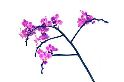 Orchid Digital Art - Orchid  by Gina Dsgn