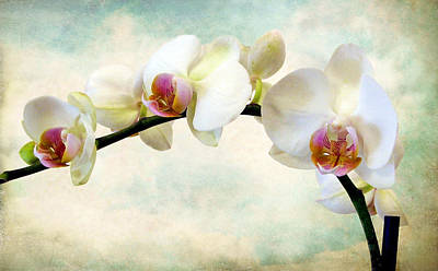 Orchid Digital Art - Orchid Heaven by Jessica Jenney