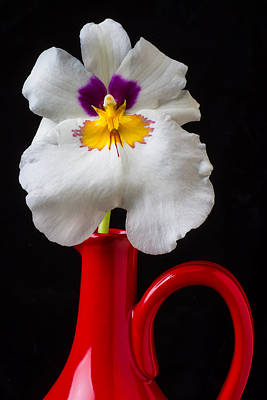 Pretty Orchid Photograph - Orchid In Red Pitcher by Garry Gay