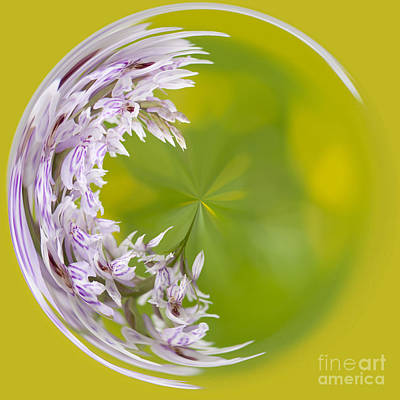 Manipulation Photograph - Orchid Moon by Anne Gilbert