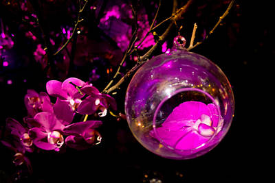Orbs Photograph - Orchid Ornament by Nadya Ost