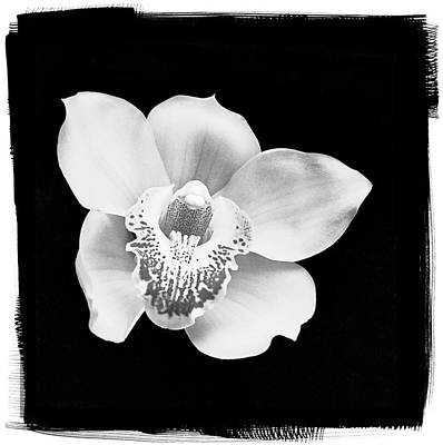 Studio Photograph - Orchid by Patrick Chuprina