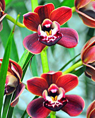 Orchid Rusty Print by Marty Koch