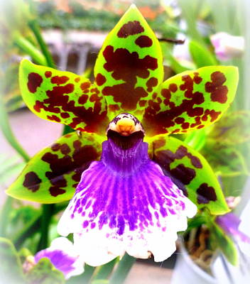 Orchid Print by The Creative Minds Art and Photography