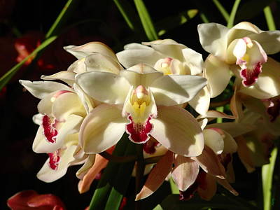 Orchids Print by Glenn McCarthy Art and Photography