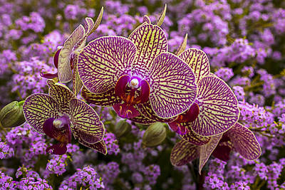 Pretty Orchid Photograph - Orchids In Pink Flowers by Garry Gay