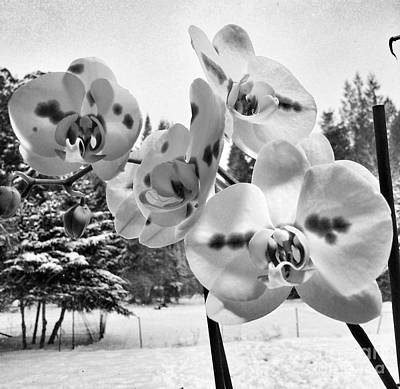 Snowed Trees Mixed Media - Orchids In Winter by Heather L Wright