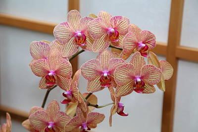Orchids - Us Botanic Garden - 011318 Print by DC Photographer