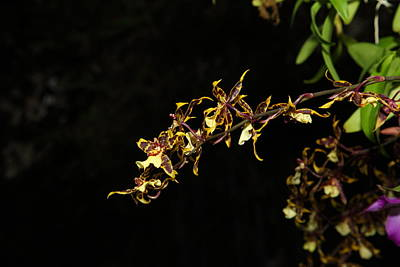 Botanic Photograph - Orchids - Us Botanic Garden - 011319 by DC Photographer