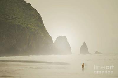 Oregon Beach Dog Print by Andrea Hazel Ihlefeld