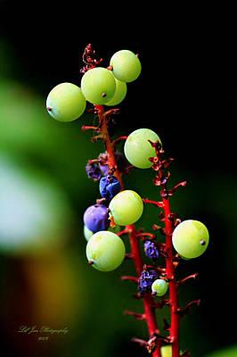 Oregon Grape Print by Jeanette C Landstrom