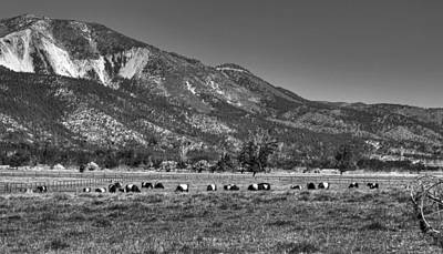 Oreo Photograph - Oreo Cows 2 by Donna Kennedy