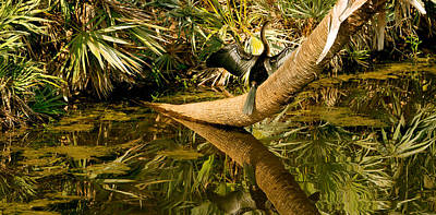 Anhinga Photograph - Oriental Darter Anhinga Melanogaster by Panoramic Images