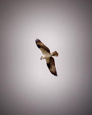 Osprey Photograph - Osprey 4 by Ernie Echols