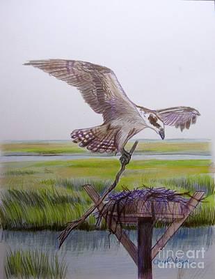 Osprey Drawing - Osprey Building His Nest by Carol Veiga