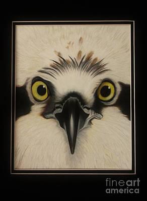 Osprey Drawing - Osprey by Island Time Artwork by Dawn Nadeau Olmsted