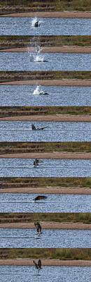 Osprey Photograph - Osprey In Action by Ernie Echols