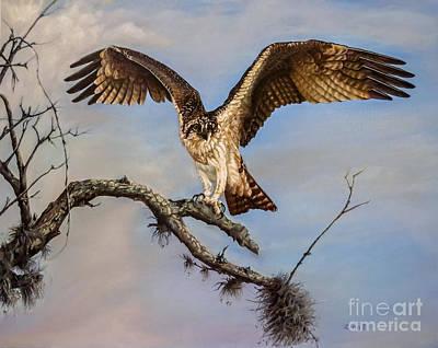 Osprey Painting - Osprey On The Branch by Zina Stromberg
