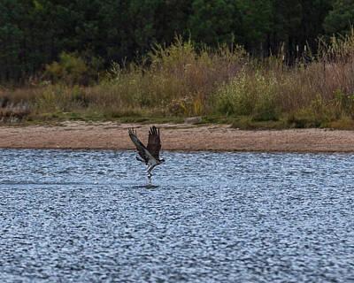 Osprey Photograph - Osprey With Catch by Ernie Echols