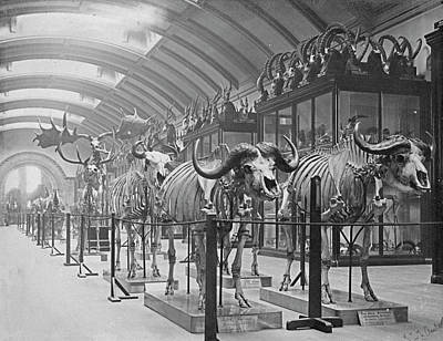 Osteological Gallery Print by Natural History Museum, London