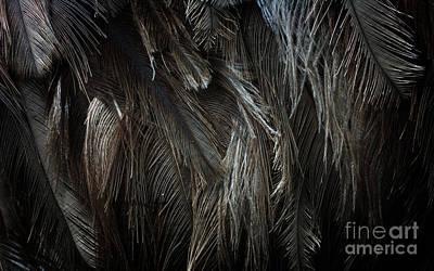 Ostrich Feather Texture Original by Jolanta Meskauskiene