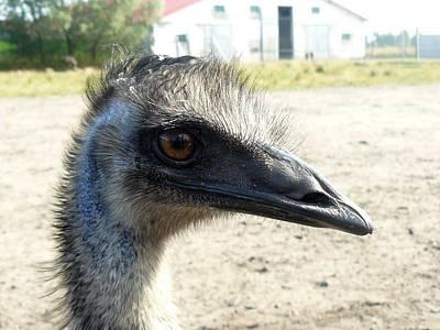 Ostrich Original by Rafal Hryncyszyn