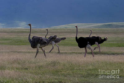 Ostriches   #0190 Original by J L Woody Wooden