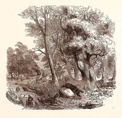 Otter Drawing - Otter Hunting, Wildlife by English School