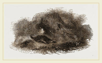 Otter Drawing - Otter In Cave by Litz Collection