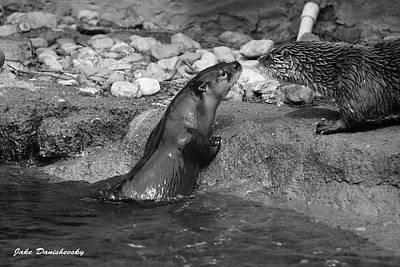 Otter Digital Art - Otter To Otter by Jake Danishevsky
