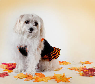 Maltese Dog Photograph - Our Best Friend by Michelle Wiarda