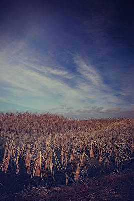 Cattails Photograph - Our Day Will Come by Laurie Search
