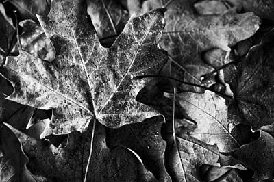 Contemplative Photograph - Out In The Cold by Christi Kraft