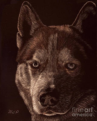 Out Of The Darkness Portrait Of A Husky Print by Margaret Sarah Pardy