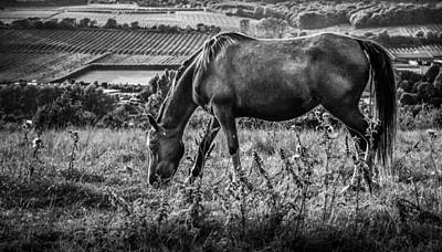 Out To Grass Print by Ian Hufton