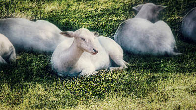 Out To Pasture Print by Melanie Lankford Photography
