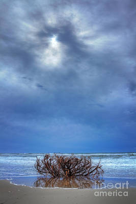 Outer Banks - Driftwood Bush On Beach In Surf I Print by Dan Carmichael