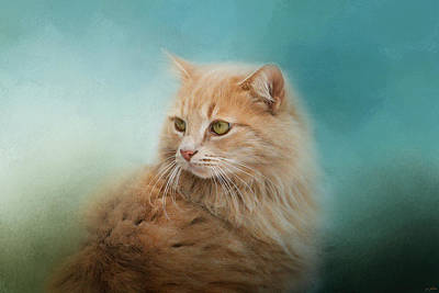 Orange Tabby Photograph - Over Her Shoulder by Jai Johnson