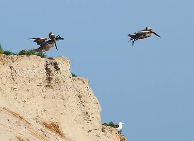 Bird Photograph - Over The Cliff by Cathy Lindsey