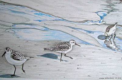 Sandpiper Drawing - Overcast Day With Sanderlings by Linda Williams