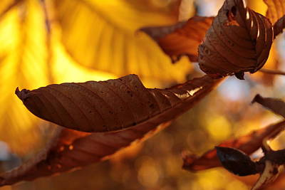 Contemplative Photograph - Overleaf by Connie Handscomb