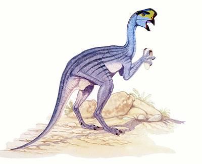 Dinosaur Photograph - Oviraptor Dinosaur by Deagostini/uig